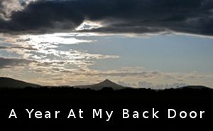 Ciara -> A year at my back door