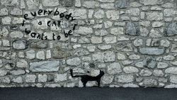 Everybody wants to be a cat (Image d'un graffiti d'un chat avec le texte 'everybody wants to be a cat')